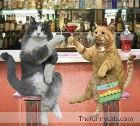 image drole boire un verre